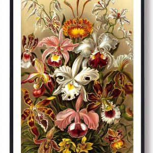 Blomster - plakat