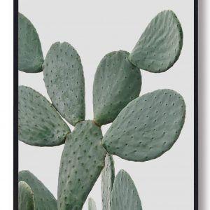 Cactus in desert - naturplakat