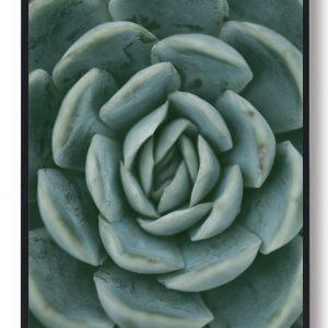 Cactus - naturplakat