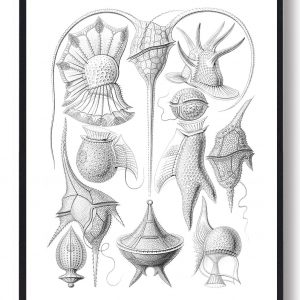 Dinoflagellater - plakat