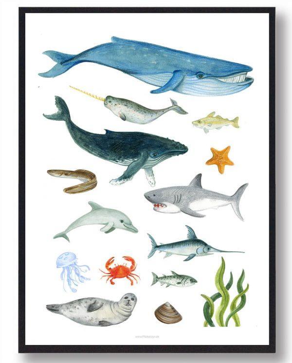 Dyr i havet - håndtegnet plakat
