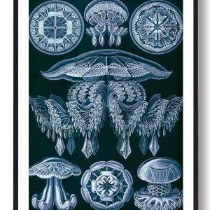 Gopler blå - plakat