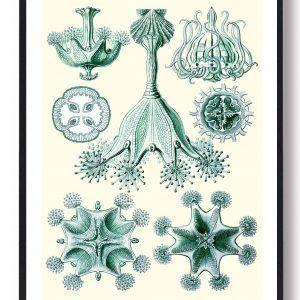 Grøn natur - plakat