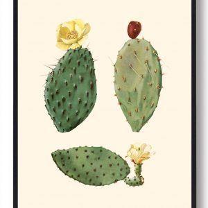 Kaktus plakat