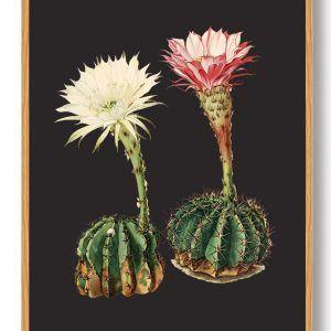 Kaktus plakat - sort