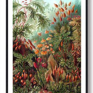 Natur 4 - plakat