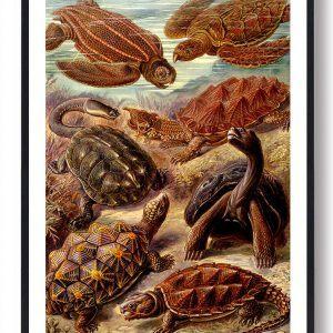 Skildpadder - plakat