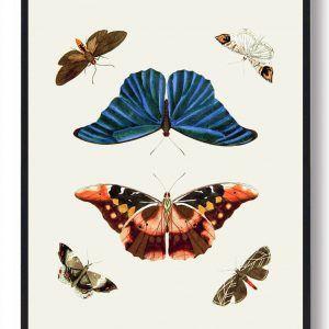 Sommerfugleplakat