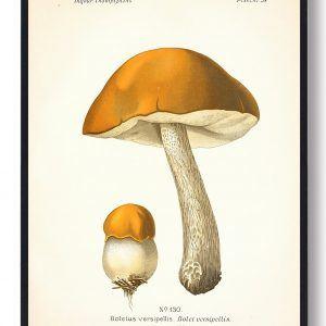 Versipellis - Svampe plakat