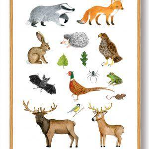 Skovens dyr - håndtegnet plakat