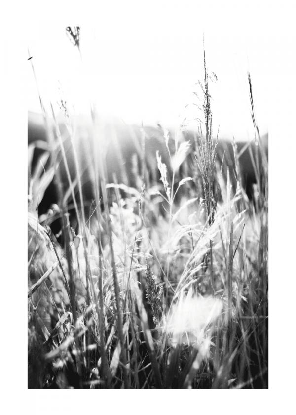 Breezy reeds - plakat