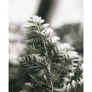 Fern leaf - plakat