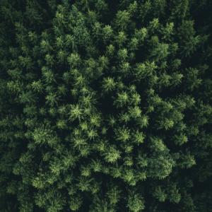 Green forrest - Airpixels plakat