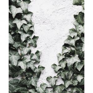 Growing Ivy - plakat