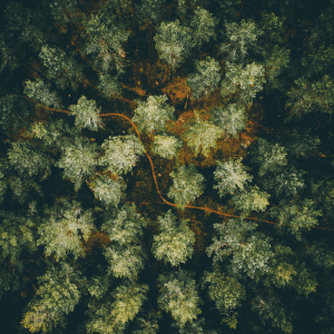 Hidden path - Airpixels plakat