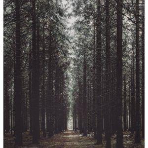 Klosterheden - Brian Lichtenstein plakat