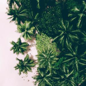 Palme No2 - Airpixels plakat