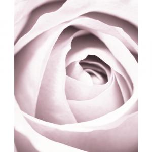 Pink beauty - plakat