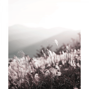 Pink reeds - plakat