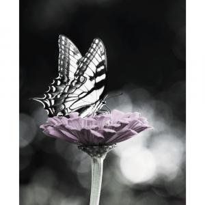 Sommerfugl - plakat