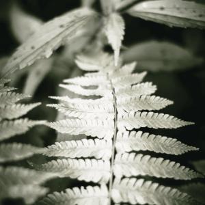 The wild fern - plakat
