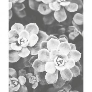 Tiny succulents - plakat