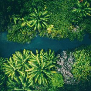 Tropisk flod - Airpixels plakat