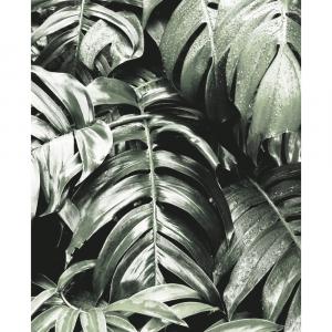 Wild Monstera plant - plakat
