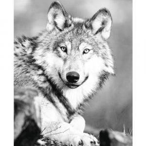 Wolf - plakat