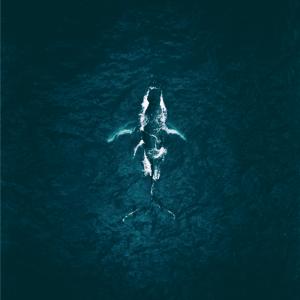 whale - Airpixels plakat
