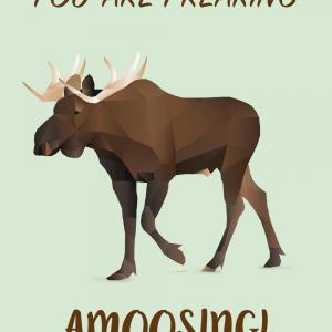Amoosing