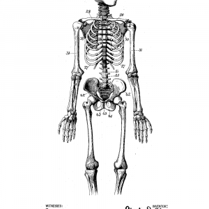Anatomi model plakat - Original patent tegning