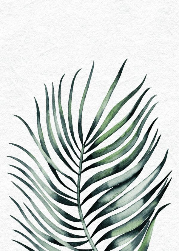 Areca palme plakat