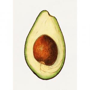 Avocado - Retro plakat