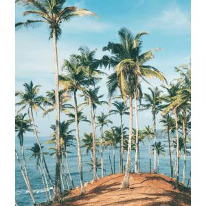 Bakke af palmer plakat