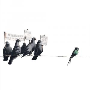 Birds of a feather - Banksy plakat