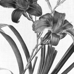 Black lilies plakat