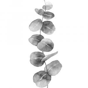 Eucalyptus leaves no 2 plakat