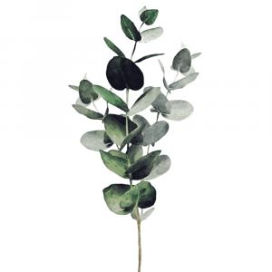 Eucalyptus leaves plakat