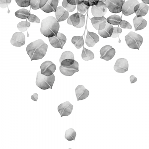 Eucalyptus rain plakat