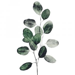 Eukalyptus plakat No2