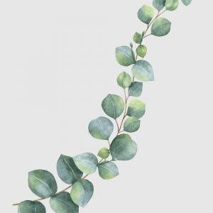 Eukalyptus plakat No3