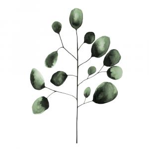Eukalyptus plakat No4