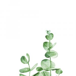 Eukalyptus plakat No5