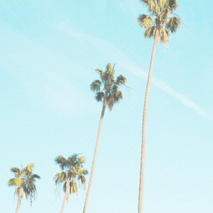 Four palm trees plakat