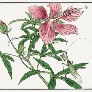Pink flower - Japansk kunstplakat