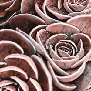 Pink succulent no. 3 plakat