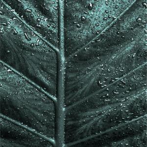 The skeleton of a leaf plakat