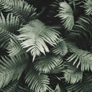 Tropisk bregne plakat