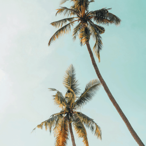Two palm trees plakat
